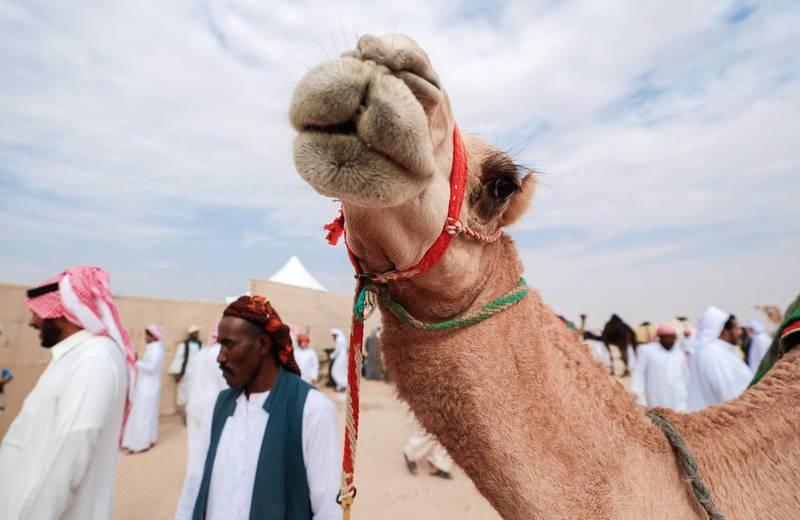 Abu Dhabi, United Arab Emirates, December 10, 2019.    Al Dhafra Festival 2019.Camel handlers at the Al Dhafra camp site.Victor Besa/The NationalSection:  NAReporter:  Anna Zacharias