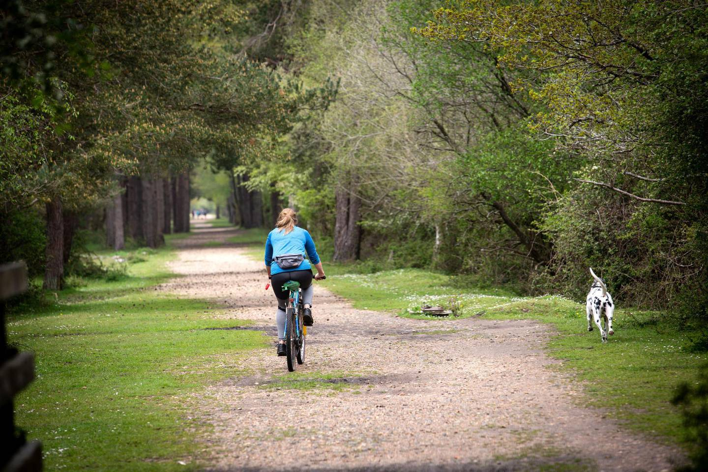 Paul Peachey feature on reinstating old railway lines, including the line the line in the New Forrest near Holmsley. The old train line to Holmsley is now a popular cycle track.