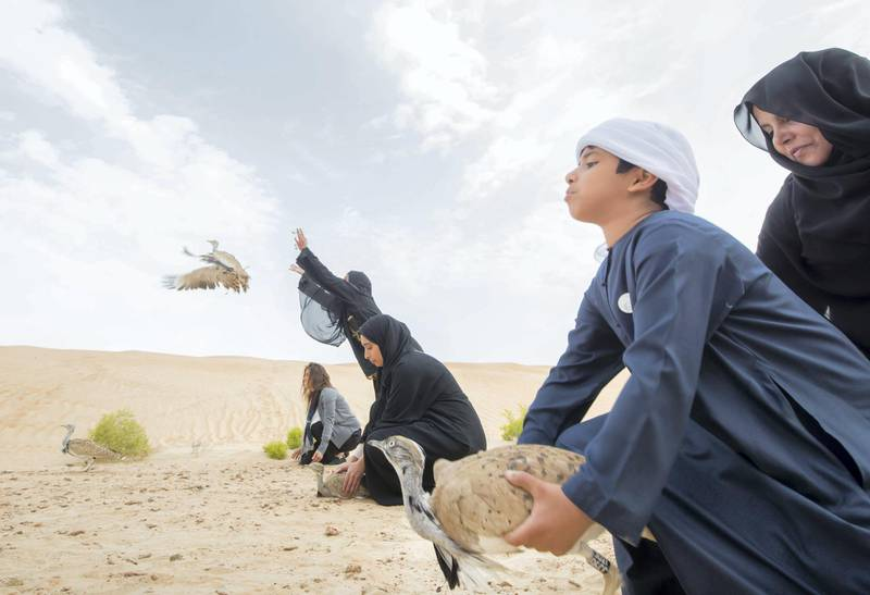 AL AIN, UNITED ARAB EMIRATES - Releasing  of 50 Houbara birds into their Habitat of the UAE desert by The International Fund for Houbara Conservation (IFHC).  Leslie Pableo for The National