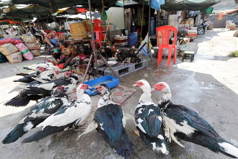 epa07332963 A Cambodian man sells poultry at a market in Phnom Penh, Cambodia, 31 January 2019. The Ministry of Health has issued guidelines urging the public to increase awareness in food safety to prevent poisoning from homemade wine and food, including the prevention of bird flu, in the lead up to Chinese Lunar New Year.  EPA/MAK REMISSA