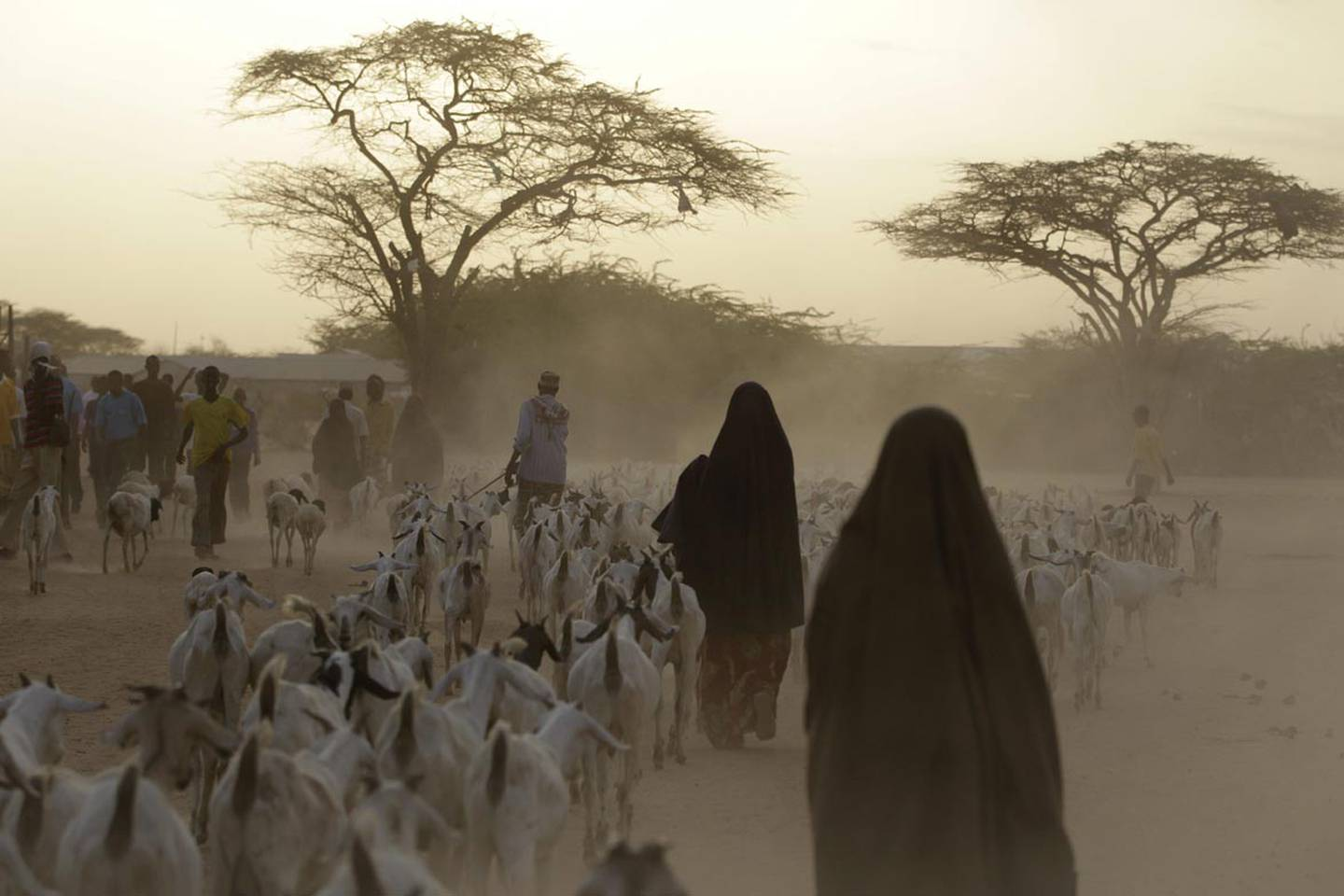 """Somali refugees lead their herds of goats home for the night, inside Dagahaley Camp, outside Dadaab, Kenya, Sunday, July 10, 2011. U.N. refugee chief Antonio Guterres said Sunday that drought-ridden Somalia is the """"worst humanitarian disaster"""" in the world after meeting with refugees who endured unspeakable hardship to reach the world's largest refugee camp in Dadaab, Kenya. (AP Photo/Rebecca Blackwell)"""