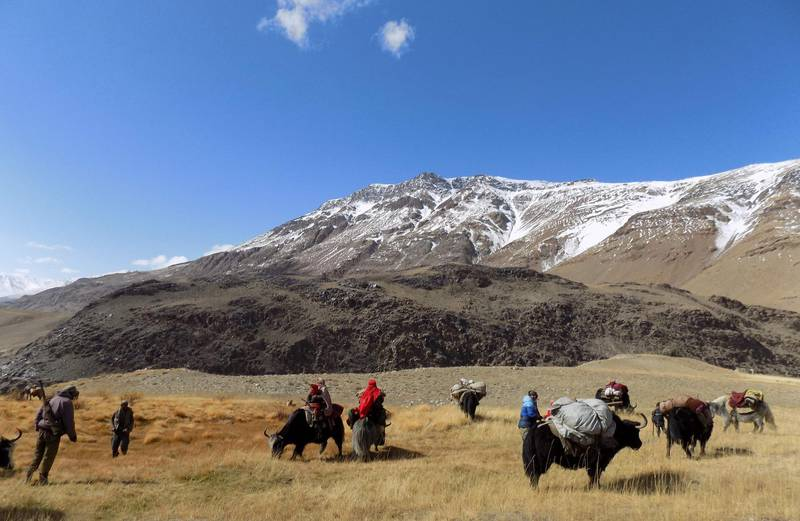 This photograph taken on October 7, 2017 shows Afghan Wakhi nomad families travelling on yaks in the Wakhan Corridor in Badakhshan province of Afghanistan. Worried about militants sneaking into a restive Chinese region from war-torn Afghanistan, Beijing is in talks with Kabul over the construction of a military base, Afghan officials say, as it seeks to shore up its fragile neighbour. / AFP PHOTO / GOHAR ABBAS / TO GO WITH AFGHANISTAN-CHINA-DIPLOMACY-ARMY by Allison Jackson with Gohar Abbas in the Wakhan Corridor