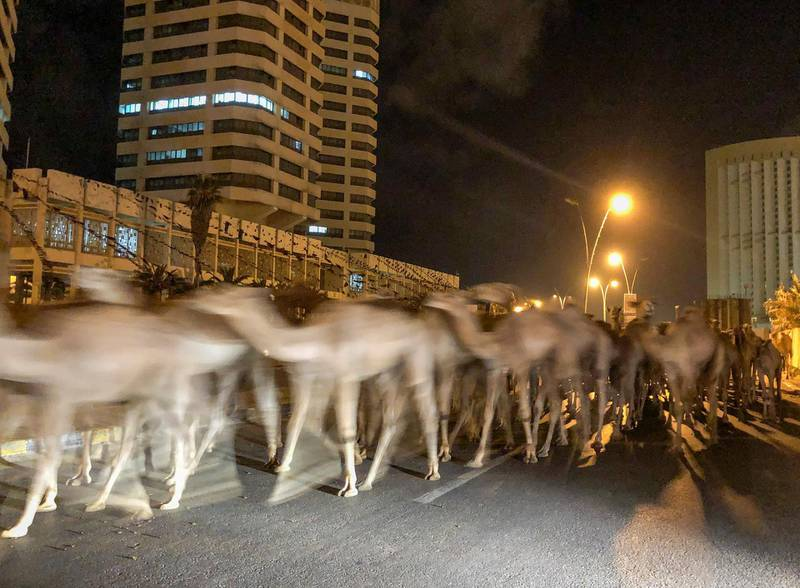A herd of camels walk across the streets in Tripoli, Libya February 19, 2020. Picture taken February 19, 2020. REUTERS/Ahmed Elumami