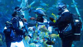 UK couple dive into marriage with underwater wedding