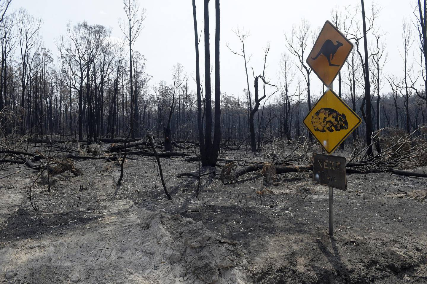 A scorched kangaroo and wombat warning sign stands next to trees burned by wildfires outside Buchan, East Gippsland, Australia, on Thursday, Jan. 9, 2020. Dozens of communities -- from small towns such as Pambula on the south coast of New South Wales state, to alpine villages in neighboring Victoria -- are again in danger from wildfires that have razed more than 2,000 homes, killed at least 26 people and charred more than 10 million hectares (25 million acres) of forest and bush across the nation in the past few months. Photographer: Carla Gottgens/Bloomber