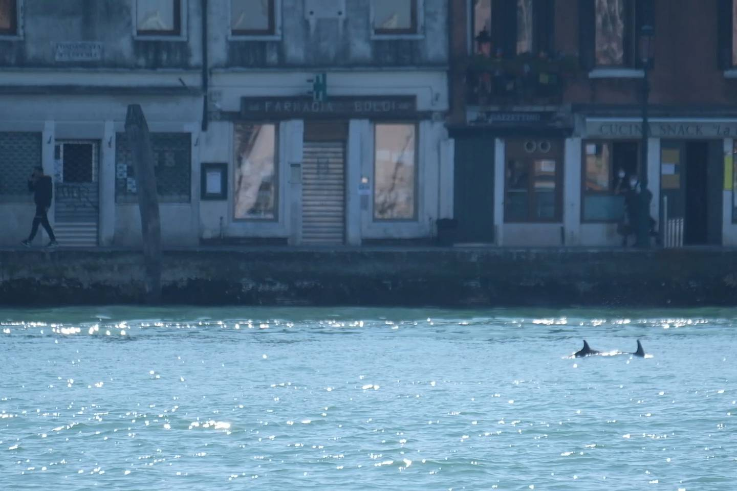 A screengrab taken from a video shows dolphins swimming in the Giudecca Canal, not far from St. Mark's Square, in Venice, Italy, March, 22, 2021. Manuel Silvestri/REUTERS TV via REUTERS