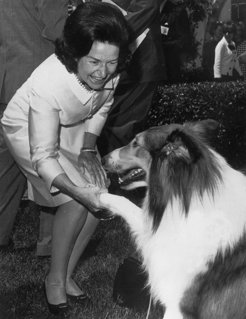 15th May 1967:  Claudia Alta Johnson, known as Lady Bird Johnson, the wife of US president Lyndon B Johnson meets Lassie at the White House, Washington DC. The famous collie is attending a function to celebrate the start of a new poster campaign against litter, featuring himself.  (Photo by Keystone/Getty Images)