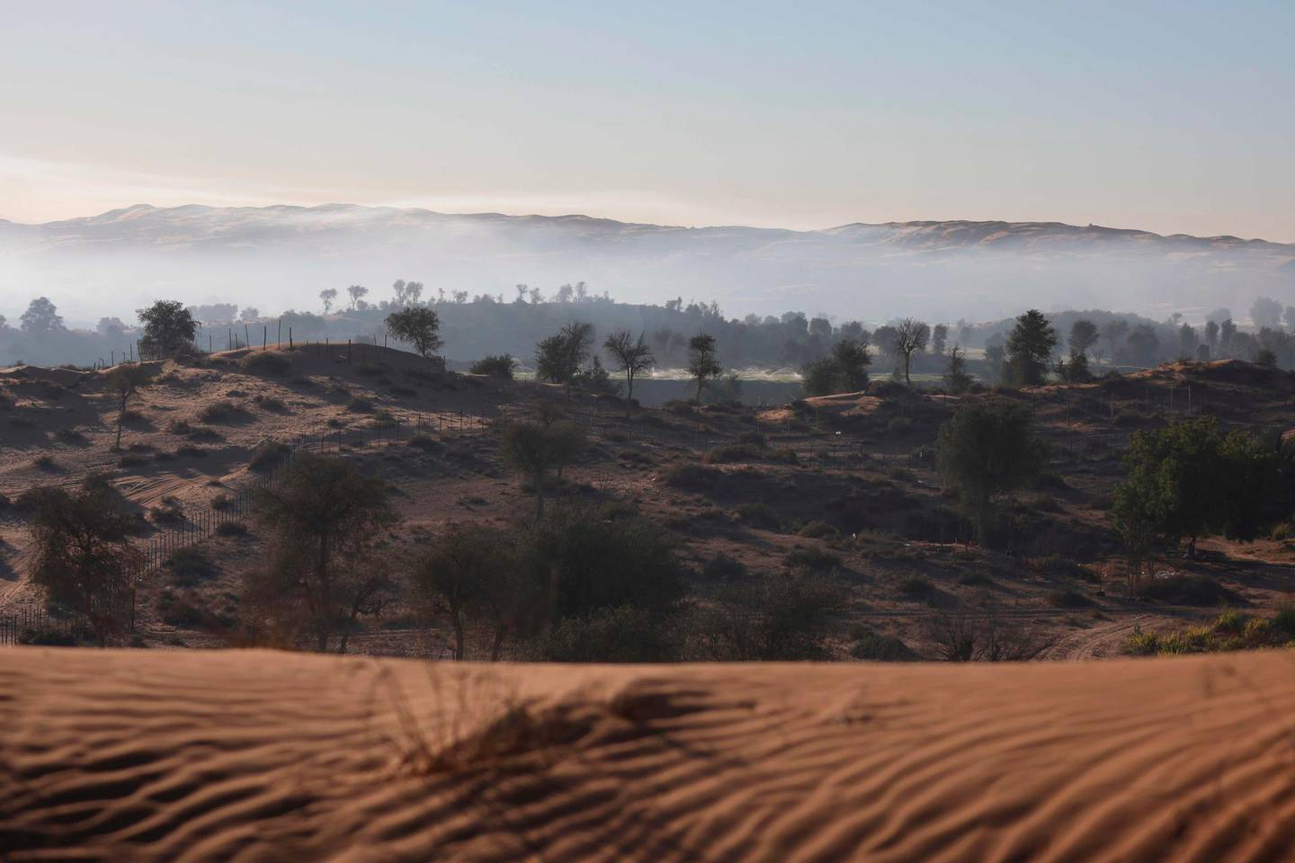 A picture taken on January 12, 2021 shows Al-Aweer desert farms, a food security oases in the Gulf emirate of Dubai, which has adopted a plan after the breakout of the Covid-19 pandemic last year to cultivate the desert and provide crops to reduce imports from abroad.  / AFP / Karim SAHIB