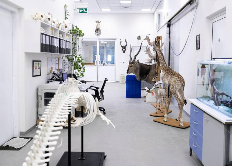 DUBAI, UNITED ARAB EMIRATES. 15 DECEMBER 2020. Taxidermy demartment in the Central Veterinary Research Laboratory in Nad Al Sheba.(Photo: Reem Mohammed/The National)Reporter:Section: