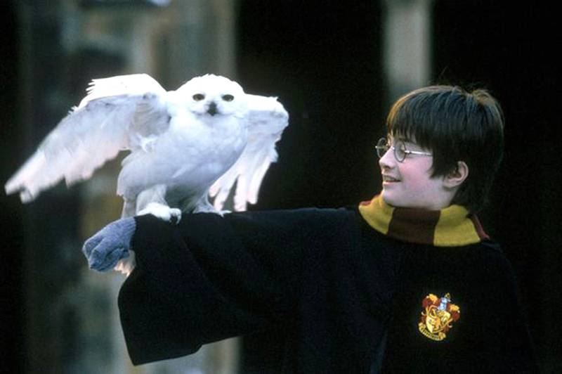 Harry Potter and his owl Hedwig CREDIT: Courtesy Warner Bros.