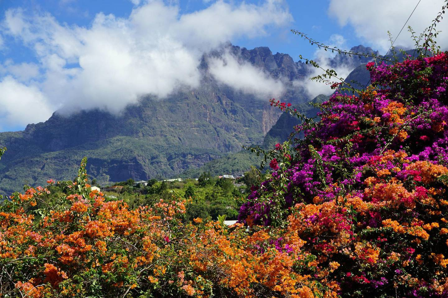 PCW9WE Colorful bougainvillea in full bloom in the tropical mountains of La Reunion, France on a clear sunny day with puffy clouds hanging on the peaks