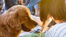 International Dog Day: Spotify reveals most popular playlists for pets