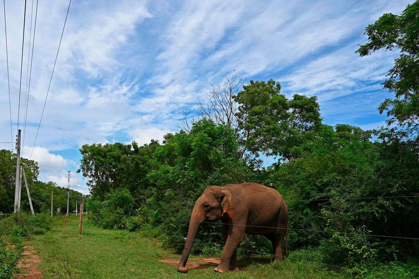 An elephant is seen behind an electric fence marking the boundary of a wildlife sanctuary in Udawalawe on January 16, 2021. / AFP / Lakruwan WANNIARACHCHI