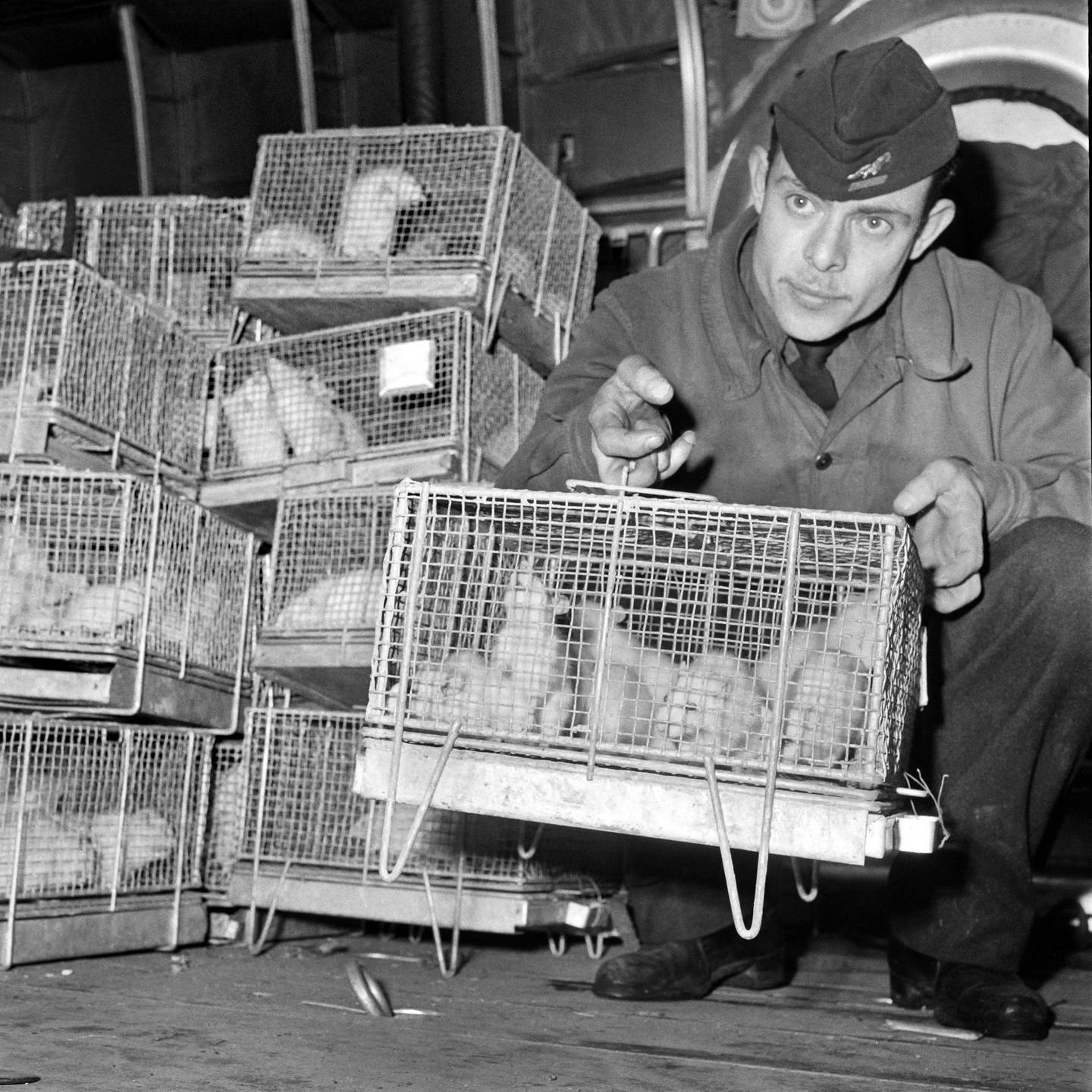 A picture taken on December 29, 1960 at Le Bourget Paris airport show a soldier holding cages of guinea pigs arriving from Reggane, southern Sahara desert, after they were exposed to the radiations of the third French nuclear test carried out in 1960, in order to establish medical treatments to fight the effects of nuclear blasts. Reggane was the site where the first French nuclear bomb was tested on February 13,1960 before the Algerian independence. France used soldiers as guinea pigs in nuclear tests in the 1960s, deliberately exposing them to radiation from atomic blasts to test the effects, according to a secret military report, obtained by AFP, revealed on February 16, 2010.  AFP PHOTO FILES (Photo by - / AFP)