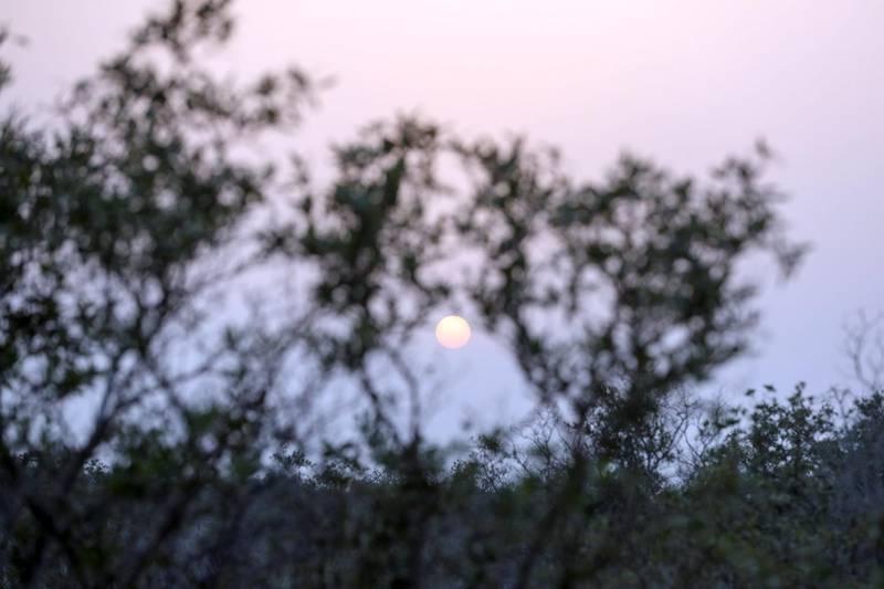 Jubail Mangrove Park-AD Sunset at Jubail Mangrove Park on Jubail Island, June 20, 2021. Khushnum Bhandari/ The National Reporter: N/A News