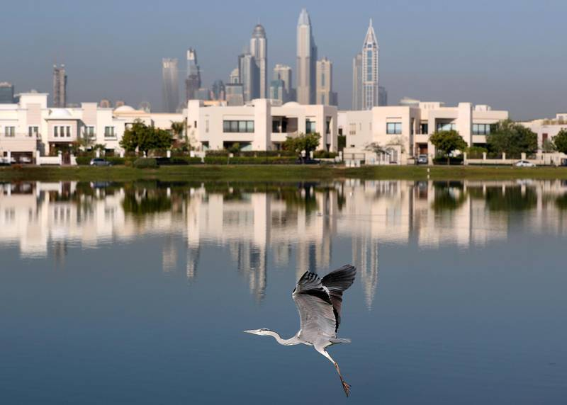 Dubai, United Arab Emirates - January 11th, 2018: Standalone. A heron flies with the marina in the background. Thursday, January 11th, 2018 at The Springs, Dubai. Chris Whiteoak / The National