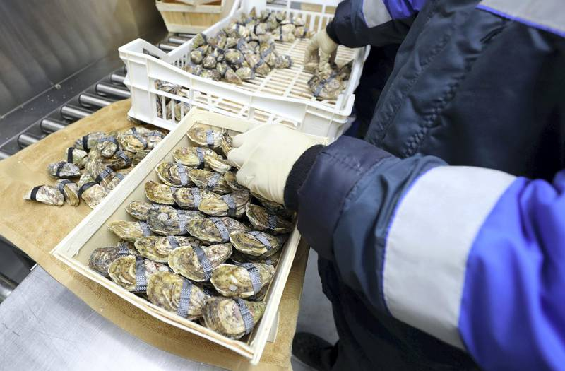 Fujairah, United Arab Emirates - Reporter: Kelly Clark. News. The depuration and packing rooms at the land processing area. Visit to the Dibba Bay Oysters farm in Fujairah. Dibba, Fujairah. Wednesday, January 13th, 2021. Chris Whiteoak / The National