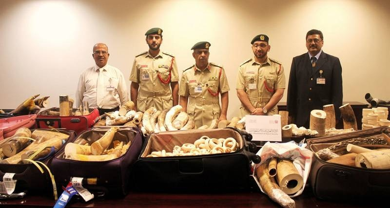 August 25, 2015, Dubai , UAE- The General Department for airport security at Dubai Police announced that it seized five separate shipments of ivory, which is internationally banned as per the terms of the CITES Convention. The shipments, which were seized last month, weighed 622 kg in total, and are worth an estimated five million dirhams, during the last month. Courtesy Dubai Police  *** Local Caption ***  na26au-ivory_brief.jpg
