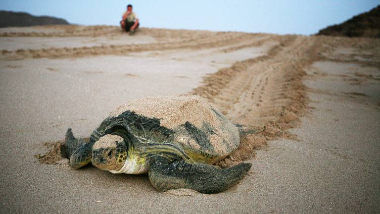 An image that illustrates this article Abu Dhabi releases red list of at-risk species