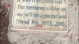 Inside Cairo's only known pet cemetery