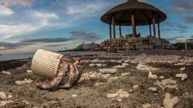 Plastic pollution: we've poisoned the sea, now it's coming for us