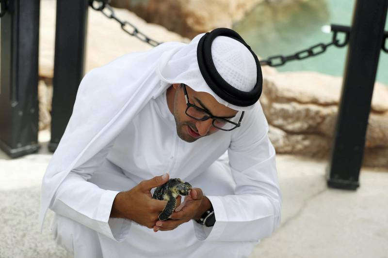 Dubai, United Arab Emirates - Reporter: Georgia Tolley. News. Nature. Sheikh Fahim Al Qassimi rescued a turtle and took it to the Burj Al Arab Turtle Rehabilitation Sanctuary for surgery. Sadly one flipper had to be amputated after it got tangled up in fishing wire. They're still hoping it might be able to be released back into the wild, if it can still dive. Sunday, March 14th, 2021. Dubai. Chris Whiteoak / The National