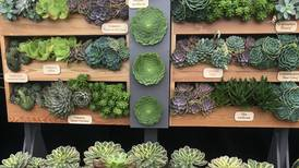Chelsea Flower Show: inspiration for your balcony and container garden designs