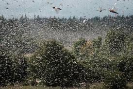 Locusts threaten to compound hunger crisis in Ethiopia's Tigray region