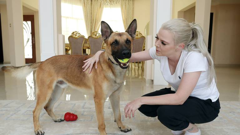 An image that illustrates this article Retired Dubai police dogs sniff out a loving home