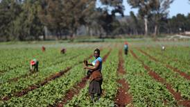 Food security concerns highlight opportunity for African agriculture