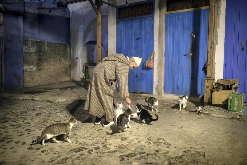 A shop owners feeds street cats, a hallmark of the town, in an alleyway deserted of tourists in Chefchaouen, northern Morocco, Saturday, Dec. 26, 2020. (AP Photo/Mosa'ab Elshamy)
