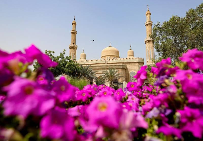 Dubai, United Arab Emirates - Reporter: N/A. News. Purple flowers outside a mosque in Jumeirah. Sunday, April 18th, 2021. Dubai. Chris Whiteoak / The National