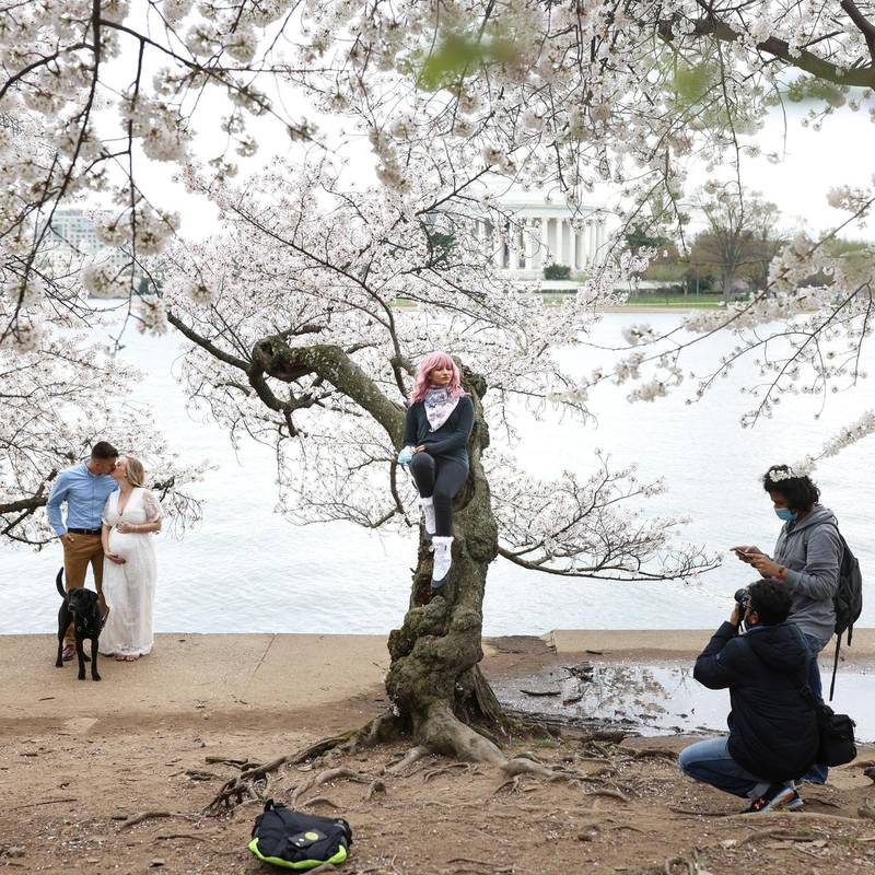 Priyanka Kaswan poses for a photo while sitting on a cherry tree at the Tidal Basin near the National Mall in Washington, U.S., March 31, 2021. REUTERS/Tom Brenner