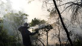 Wildfire burns through Greek pine forest for fourth day
