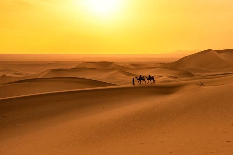 Camel Caravan in Sand Dune. Getty Images