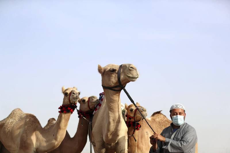 Dubai, United Arab Emirates - Reporter: Anna Zacharias. News. Rahim Daad, from Pakistan. Handlers prepare the camels for racing at Al Marmoom camel race track. Tuesday, September 1st, 2020. Dubai. Chris Whiteoak / The National