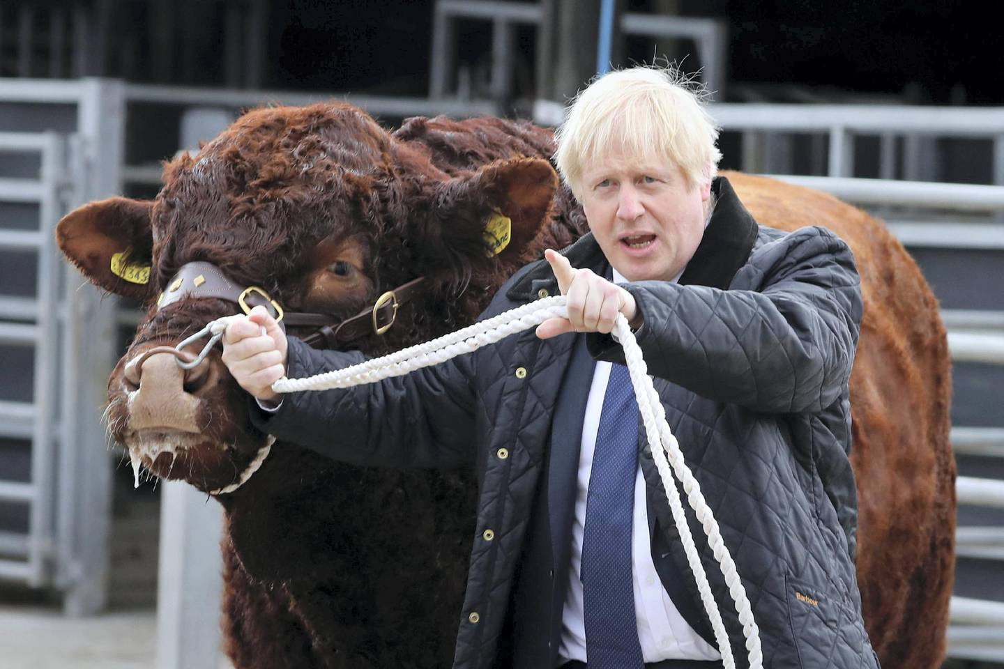 Britain's Prime Minister Boris Johnson (R) tries to walk a bull during a visit to Darnford Farm in Banchory near Aberdeen in Scotland on September 6, 2019. - Prime Minister Boris Johnson heads to Scotland on Friday in campaign mode despite failing to call an early election after MPs this week thwarted his hardline Brexit strategy. (Photo by Andrew Milligan / POOL / AFP)