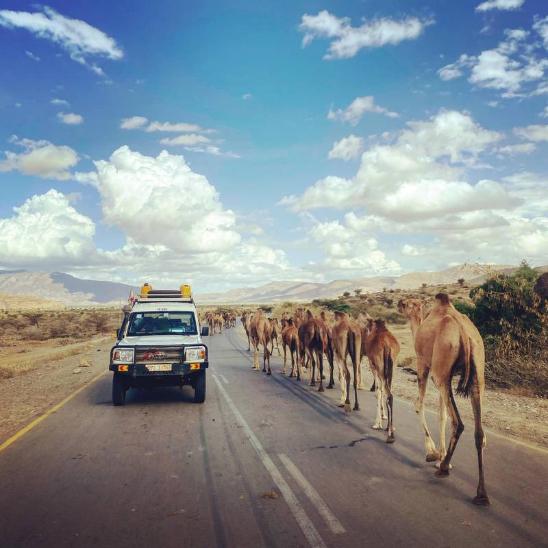An MSF car crosses a caravan of camels during an assessment in an area of Tigray, in northern Ethiopia.