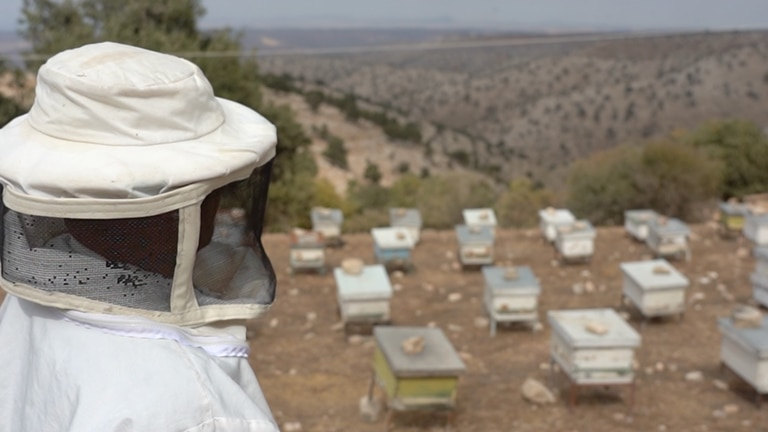 An image that illustrates this article Meet the beekeeper of Um Qais, fighting to preserve Jordan's nature