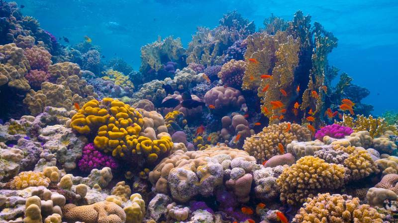 The Red Sea Project offers access to a unique underwater world, home to some of the world's few remaining thriving coral reefs. Courtesy The Red Sea Development Company