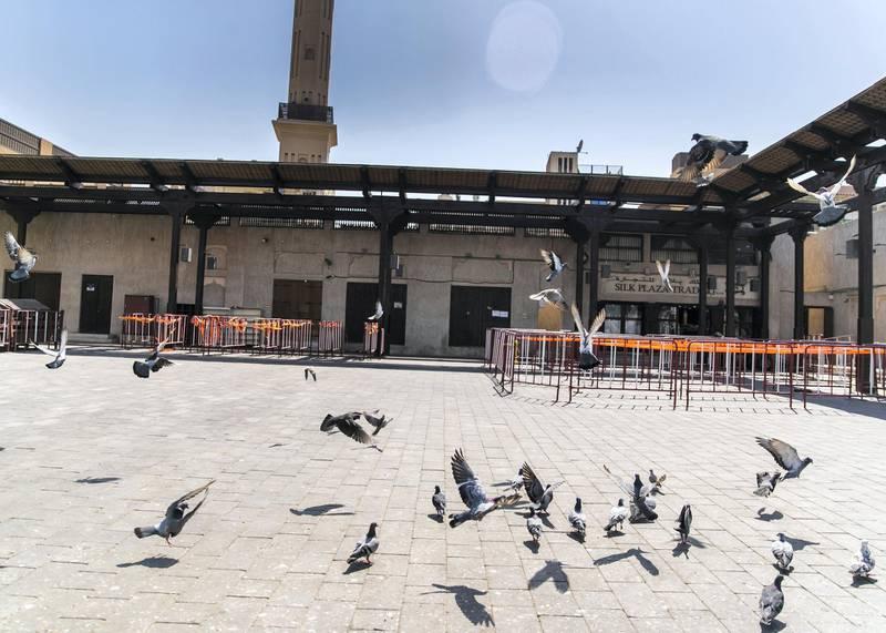 DUBAI, UNITED ARAB EMIRATES.  1 MARCH 2021. Pigeons by Shiva Temple in Bur Dubai.Photo: Reem Mohammed / The NationalReporter: Kelly