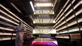 Farming secrets from New Zealand to future-proof UAE food demand