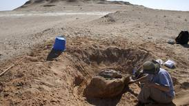 Monkey tooth fossil gets to the root of what UAE was like millions of years ago