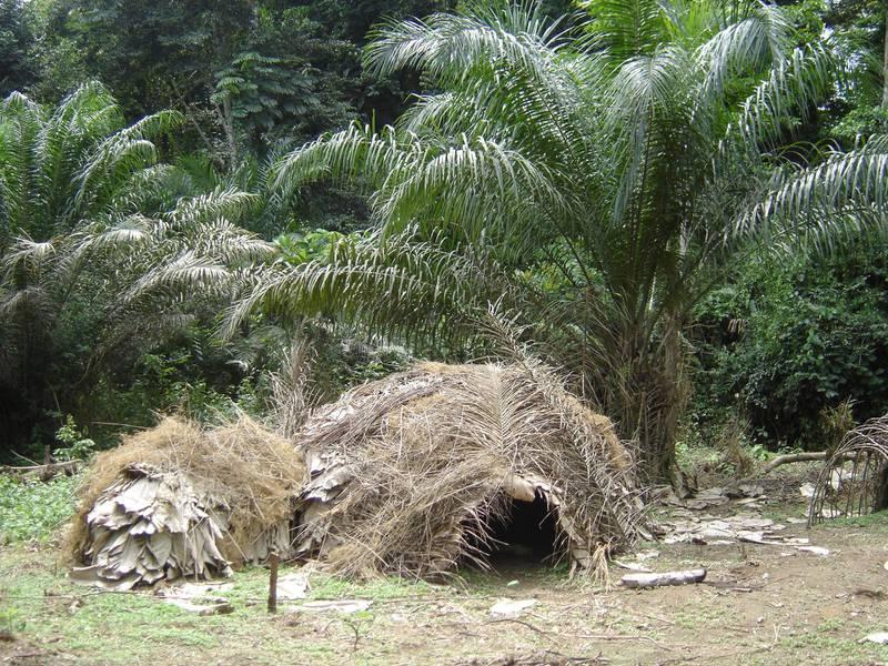 Dja Faunal Reserve (Cameroon)