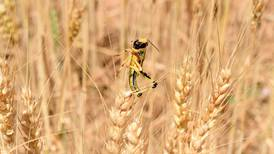 Iran may use military against locusts threatening crops