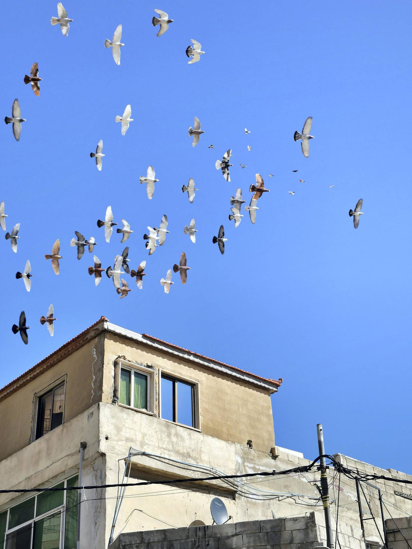 Groups of pigeons fly around Zaid Al-Otayat family's rooftop in Amman. Picture by Charlie Faulkner