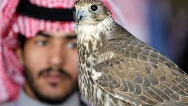 World's largest falconry exhibition opens in Riyadh