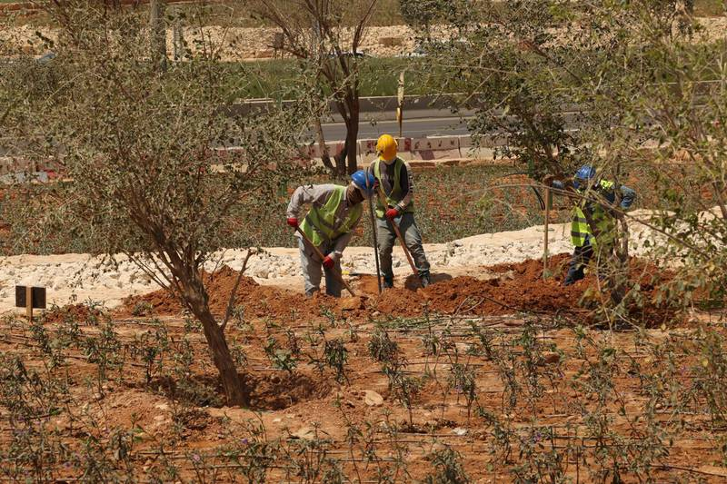 """Workers plant trees next to a highway in the Saudi capital Riyadh, on March 29, 2021. - Although the OPEC kingpin seems an unlikely champion of clean energy, the """"Saudi Green Initiative"""" aims to reduce emissions by generating half of its energy from renewables by 2030. (Photo by Fayez Nureldine / AFP)"""