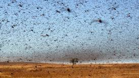 World Bank approves $500m to help Middle East and African countries fight locust swarms