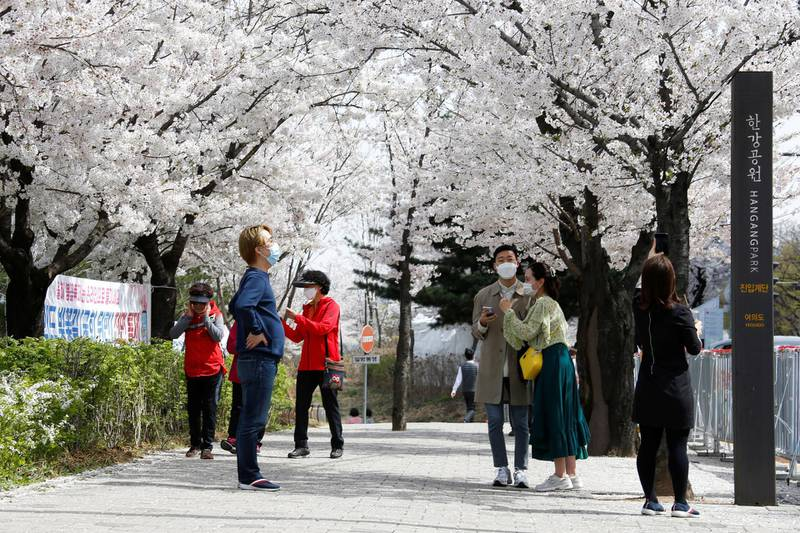 People walk near a cherry blossom street, closed to avoid the spread of the coronavirus disease (COVID-19), in Seoul, South Korea, April 1, 2021.   REUTERS/Heo Ran